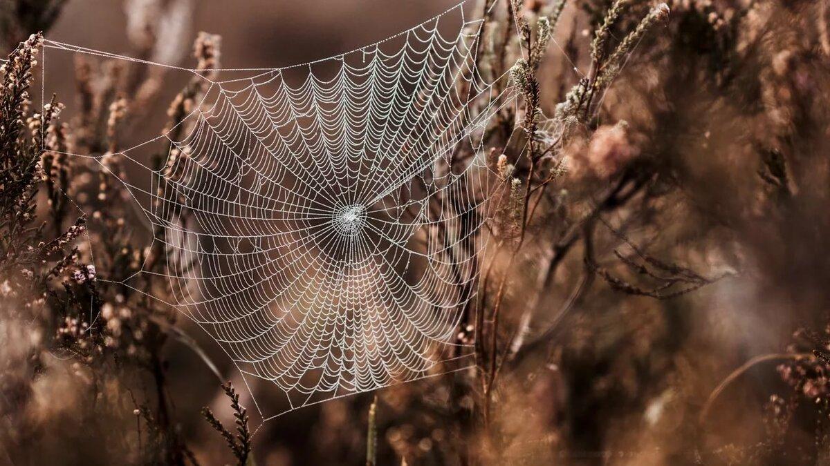 тушенка фото зимней паутинки правом