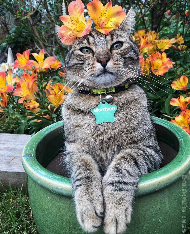 Кошек картинки смешные