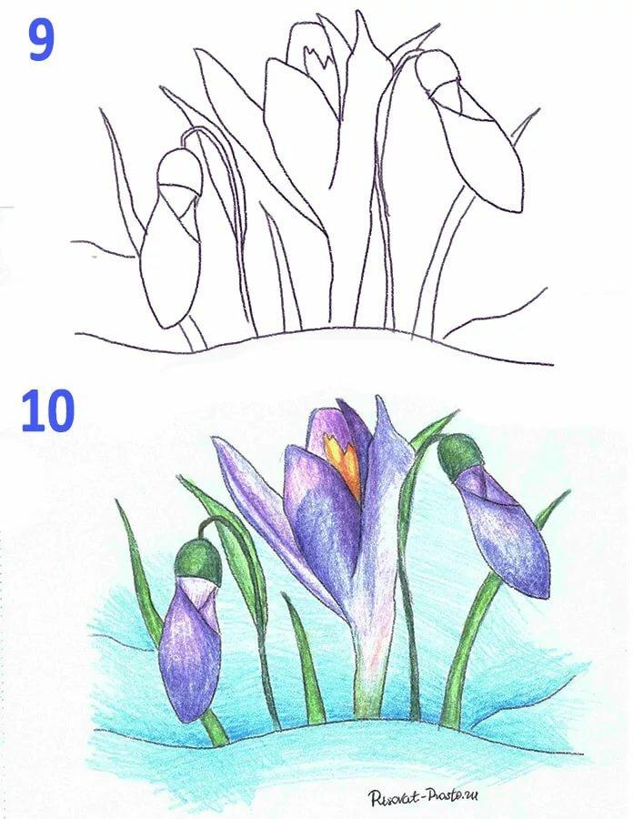 Картинки подснежников как нарисовать