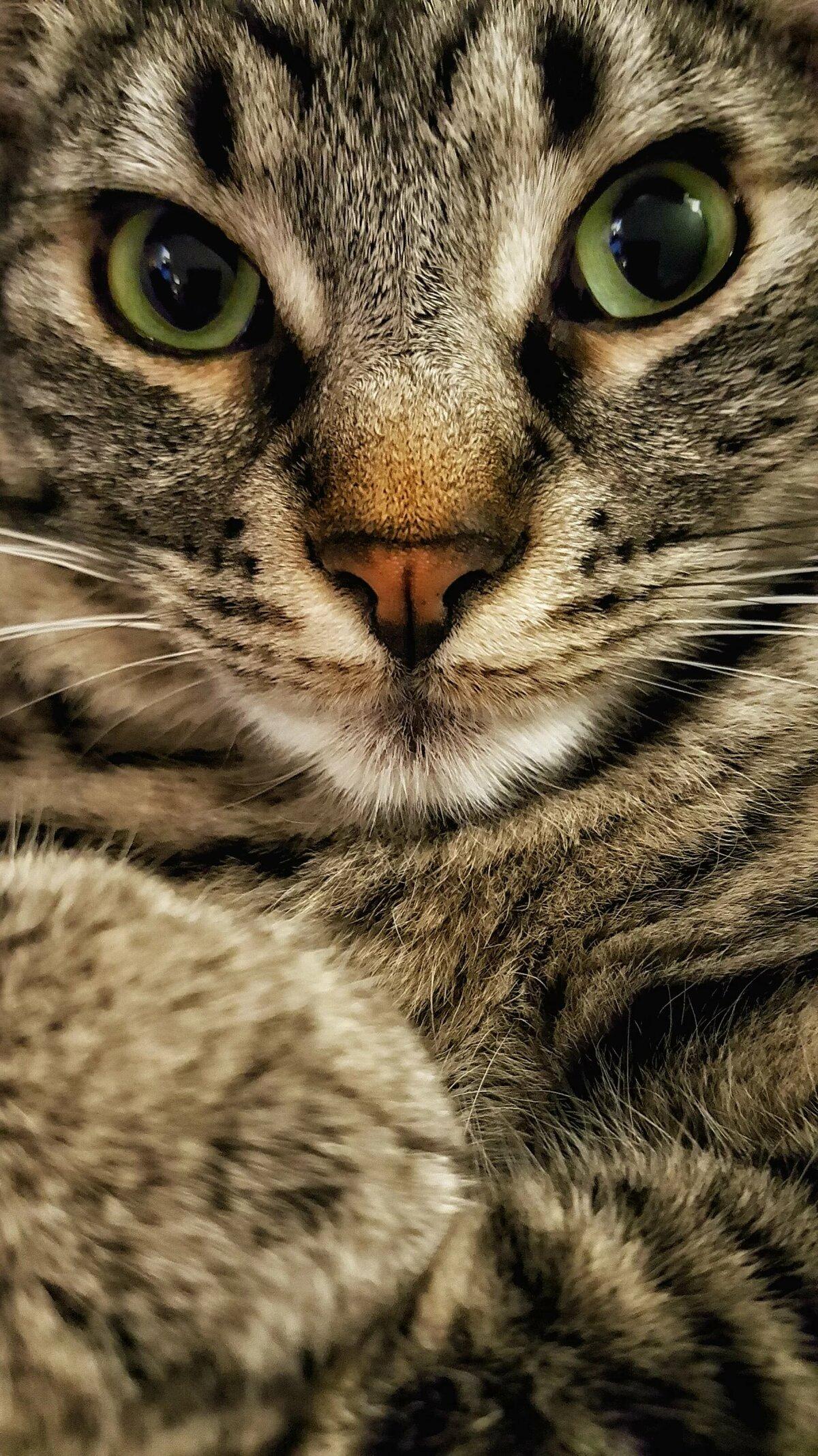 картинки для телефона кошки