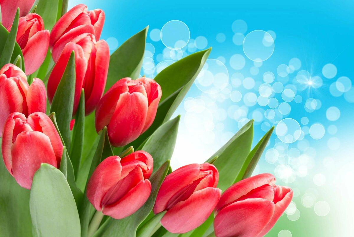 Открытка красные тюльпаны
