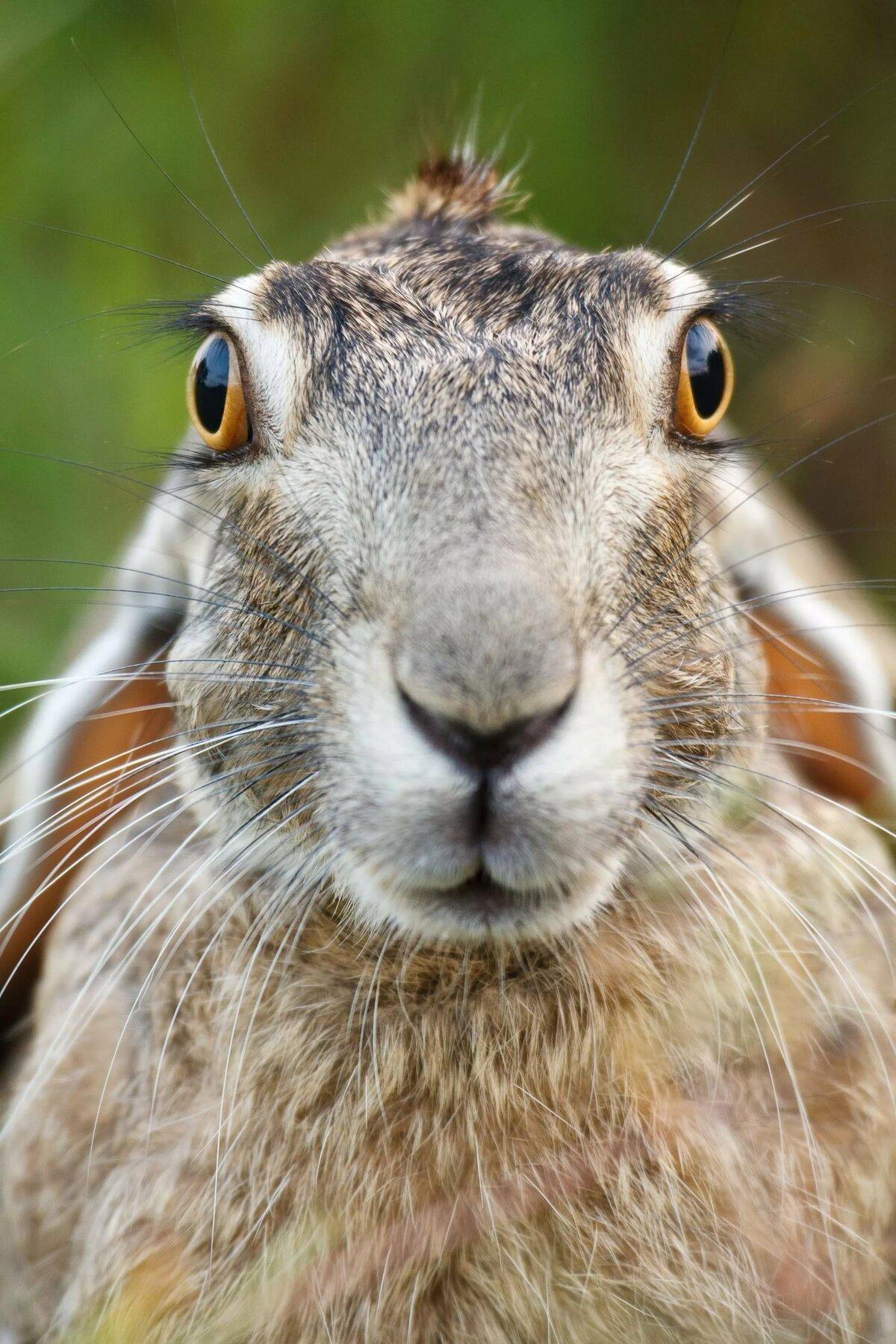 диваны зайцы кролики прикольные картинки молодняк