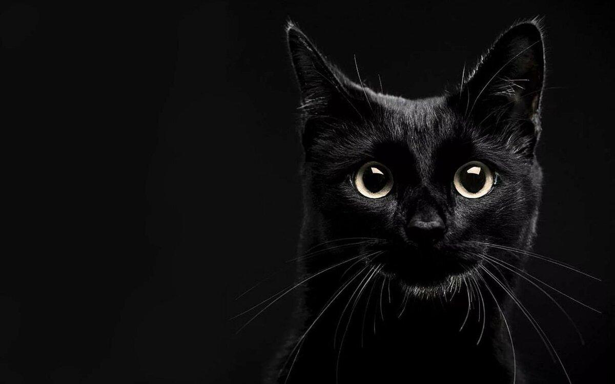 Черная заставка картинки