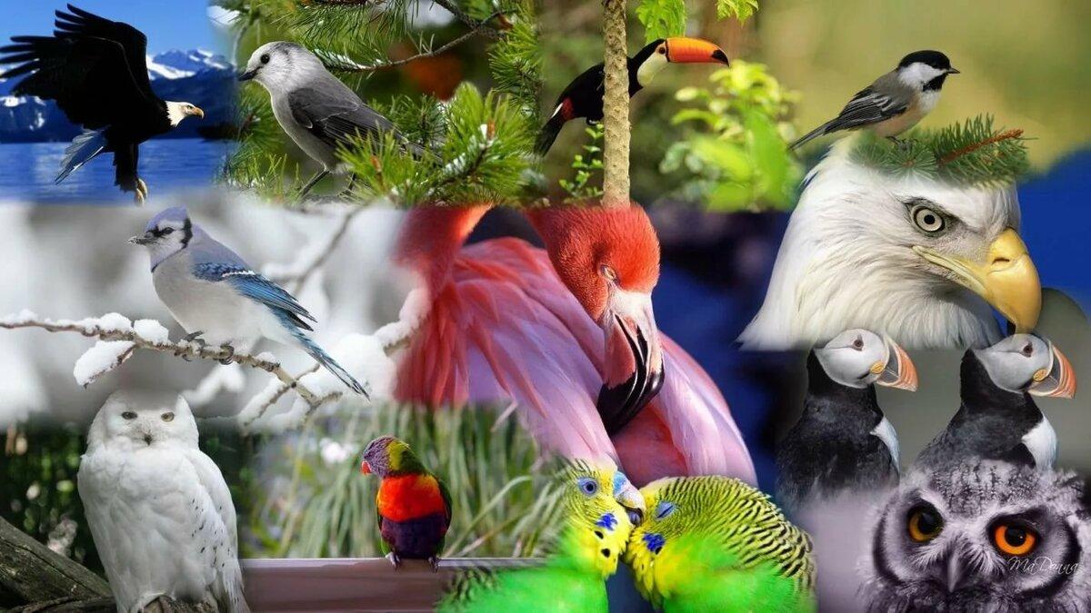 Картинка с несколькими птицами