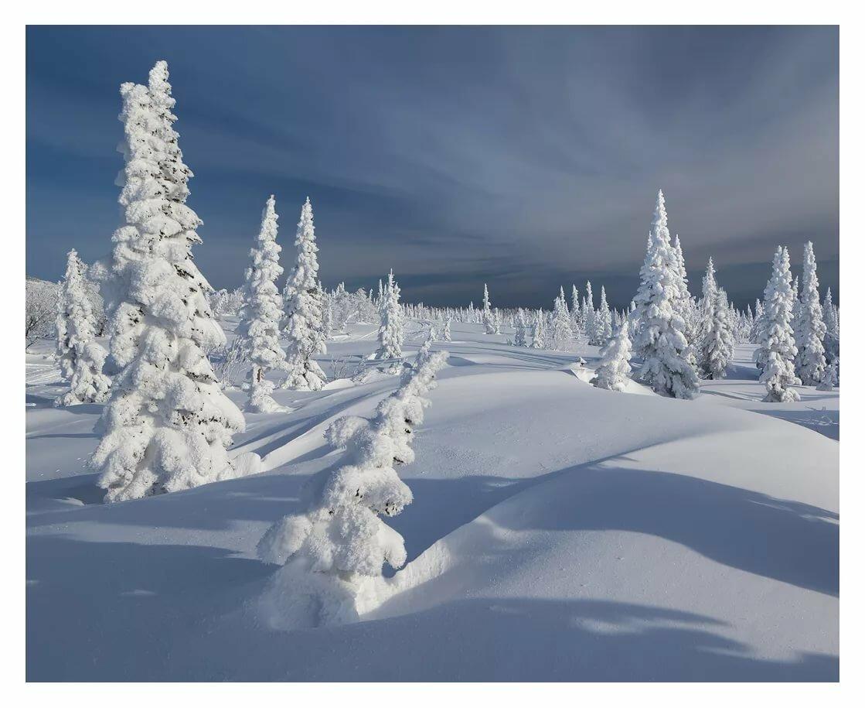 картинка белый снег пушистый гибискус