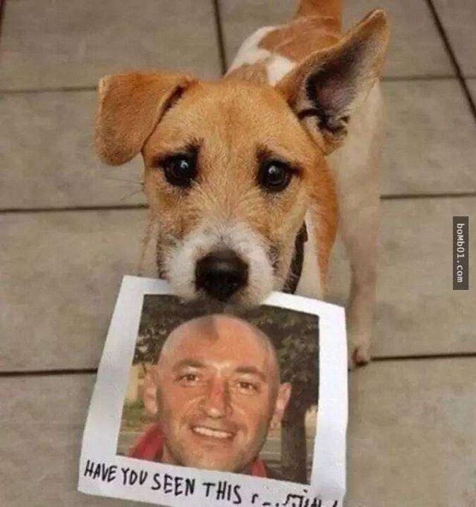 индекс фото с надписью собака сможете