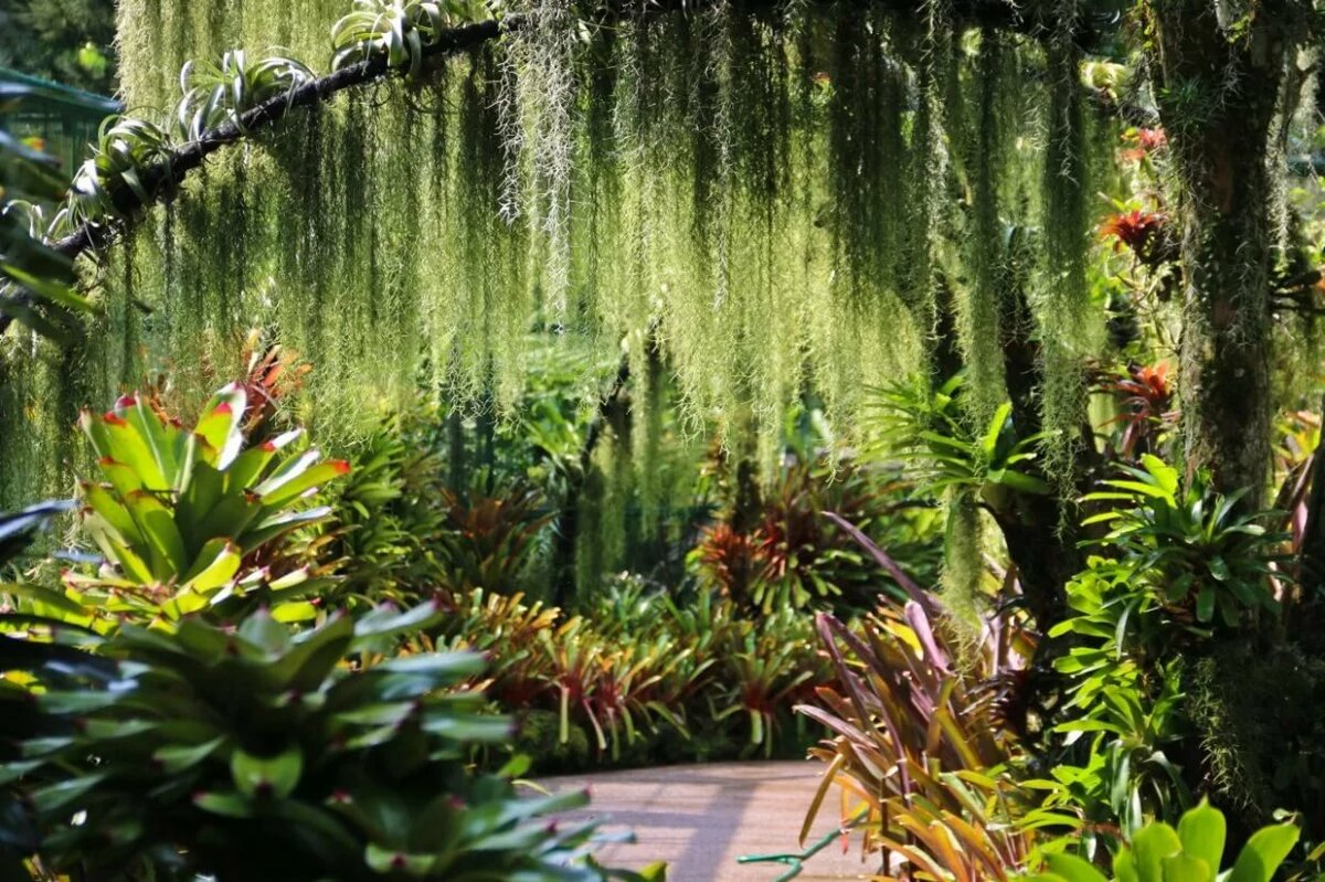 фото тенелюбивых садов сингапура играть только для