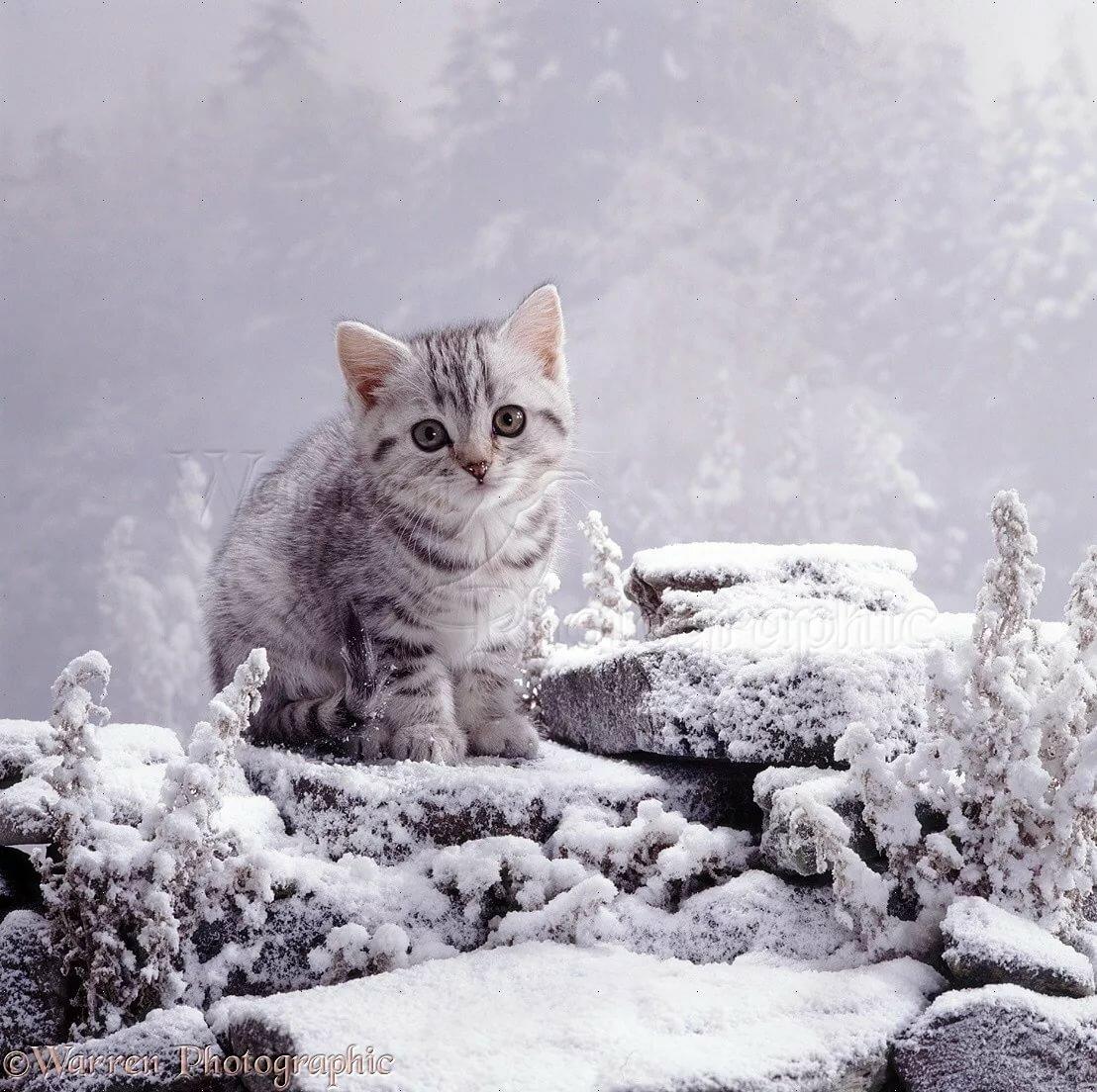открытки доброе утро и хорошего настроения природа зима
