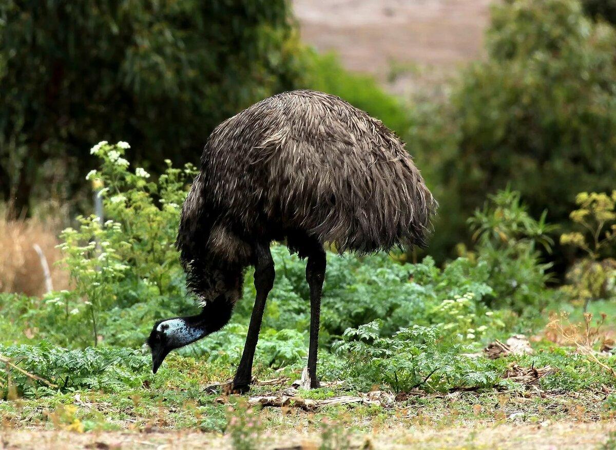 набережную картинки страуса эмо откинул руку