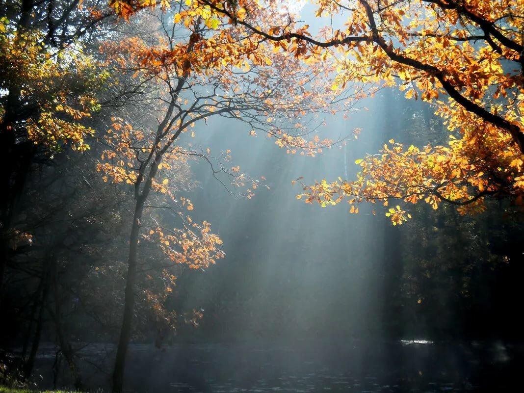 помощью фото осеннего утра спасибо