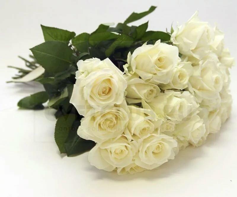 Картинки букет белых роз с надписями