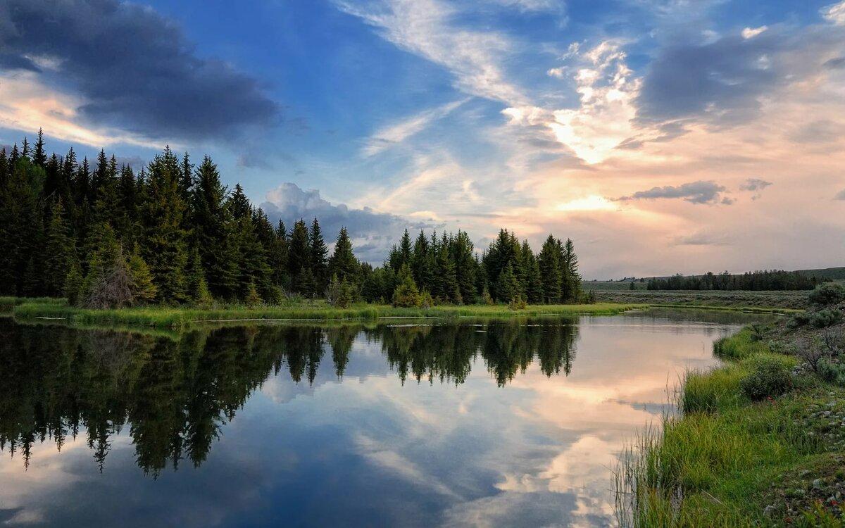 Леса река картинки