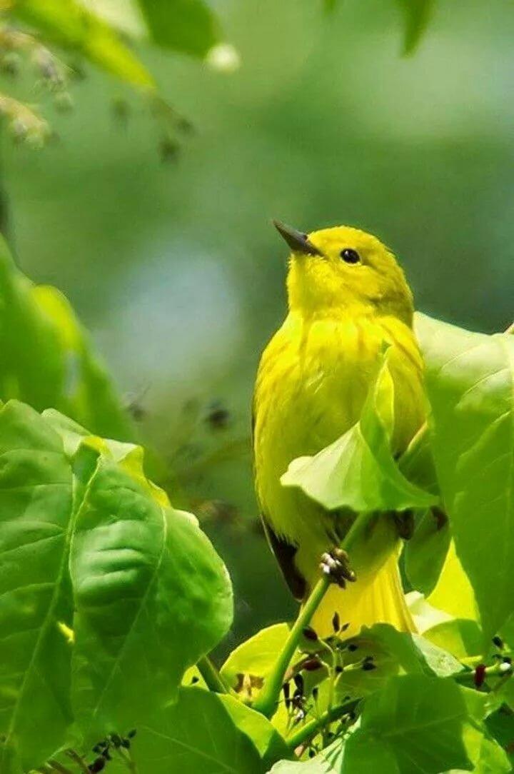 Картинки желто зеленые