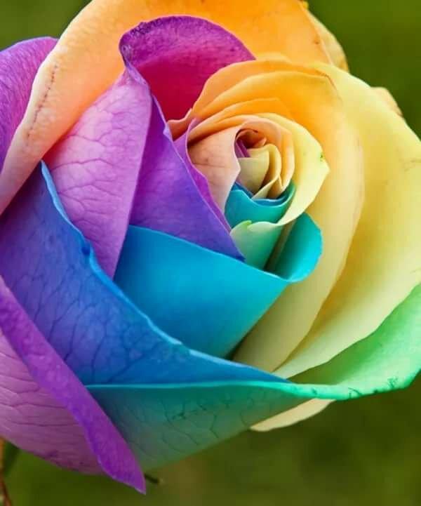 фото самого красивого цветка в мире эвакуатор эта