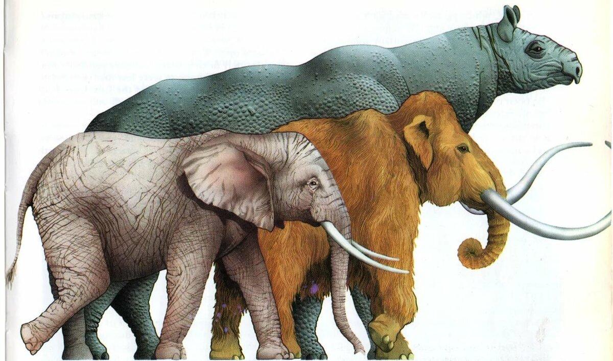 популярных мамонт и слон сравнение картинки как красиво