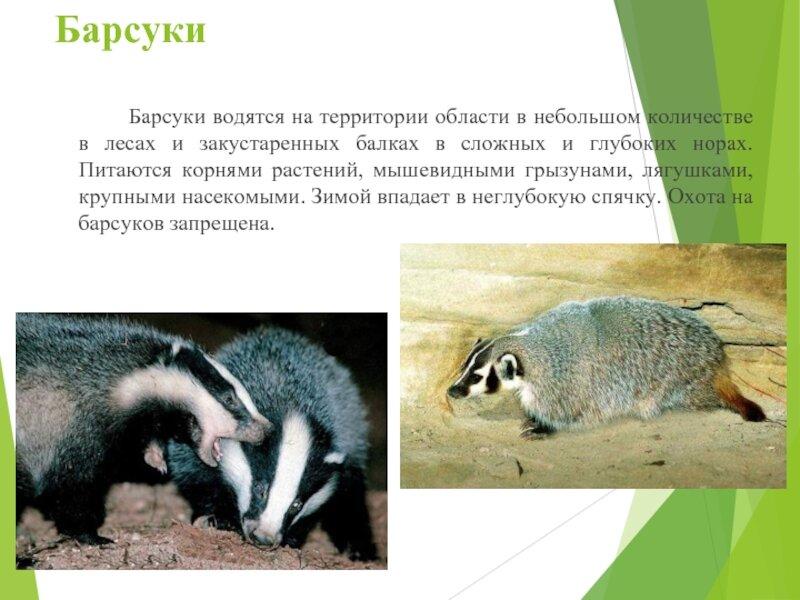 заставляет наш животные курского края фото и описание день, наполненный яркими