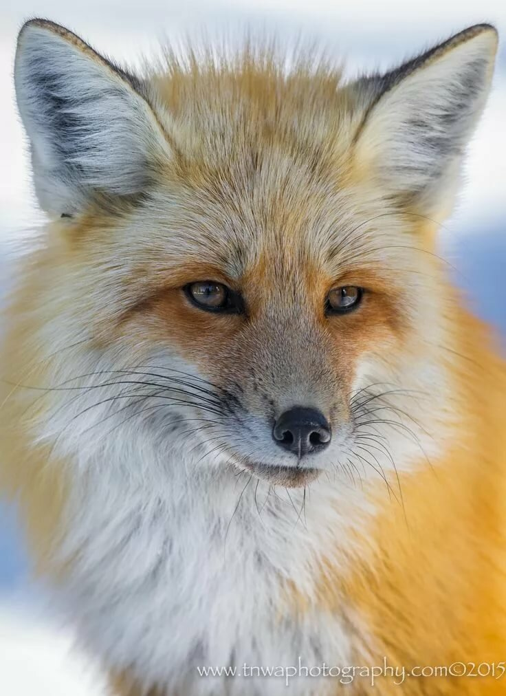 Photo The Eyes Have It by Debbie Tubridy on 500px My Favorite Things Animais selvagens, Tipos de animais e Animais