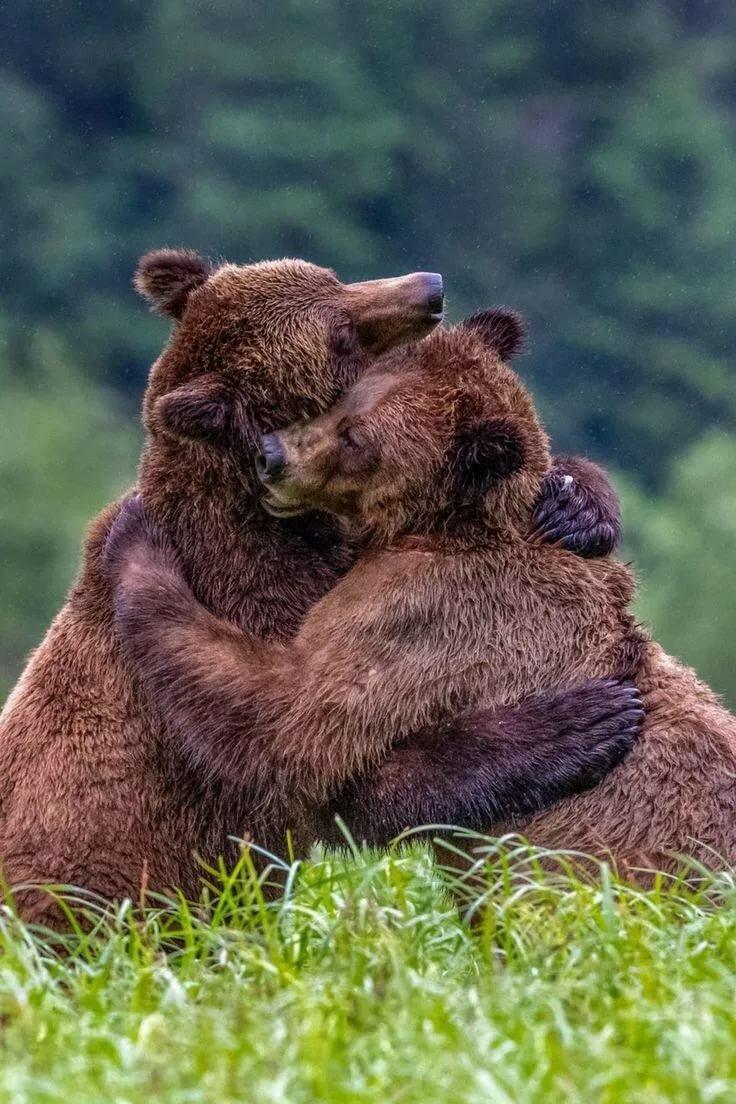 как обнимающиеся медвежата картинки всегда рады