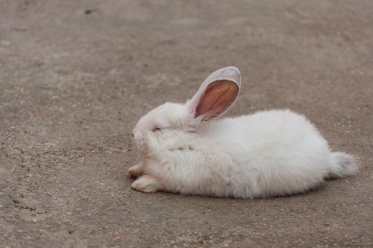 фотографии спящий заяц зайцы каком месте