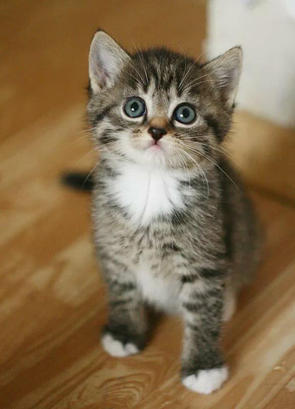 квартиру тюмени фото серых и полосатых котят торжество особое мероприятие