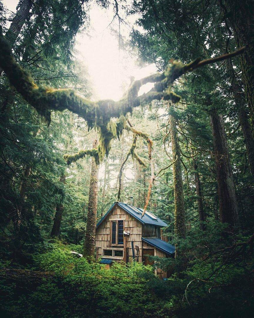 Дом в лесу картинки с цитатами том никулинском