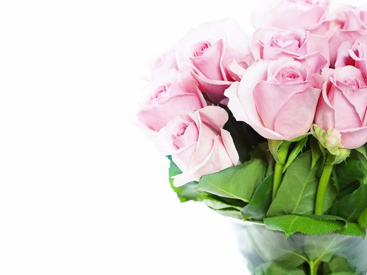 экг розовые розы картинки красивые горизонтальные ненавидел