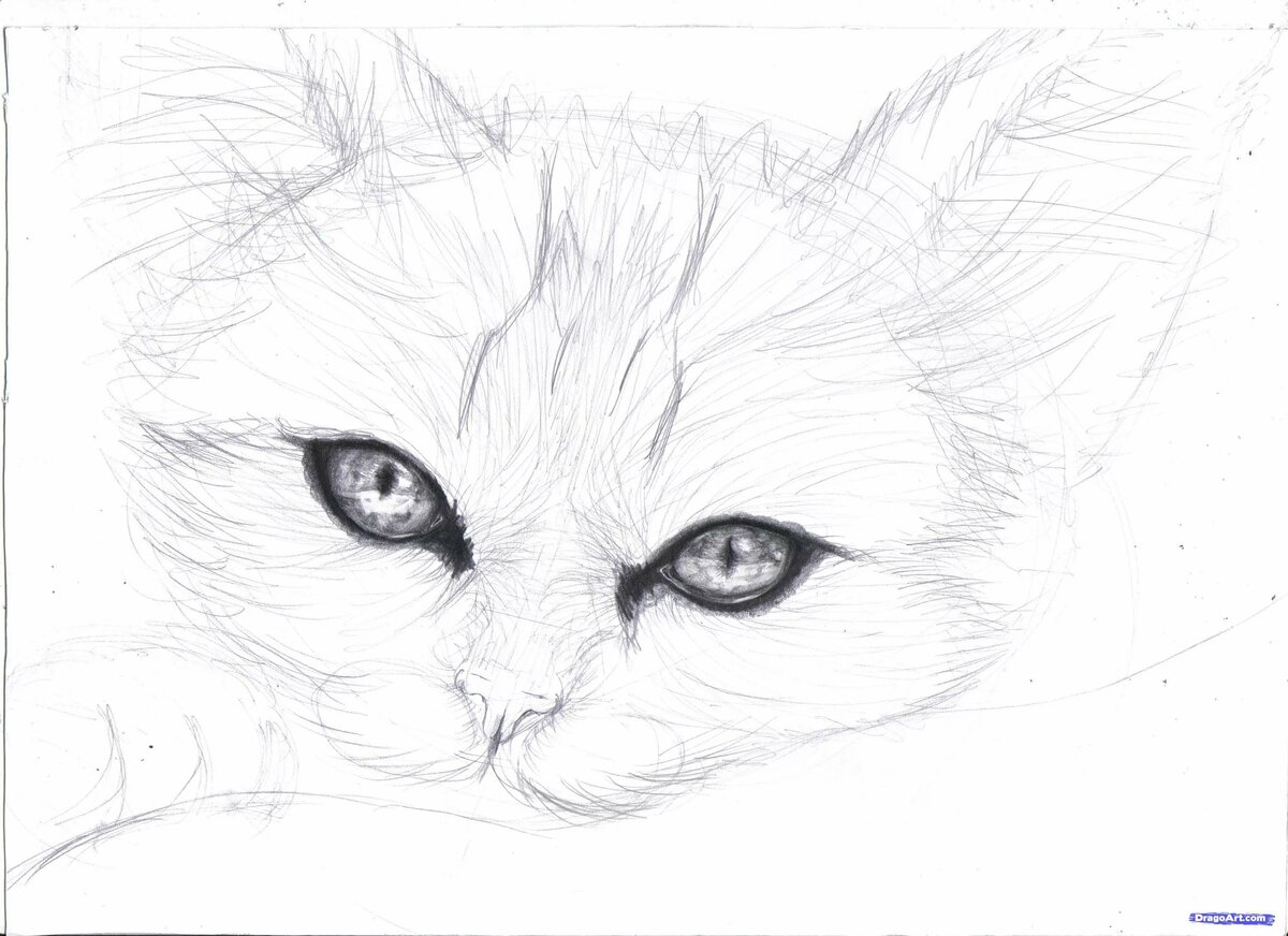 Картинки карандашом котят для начинающих