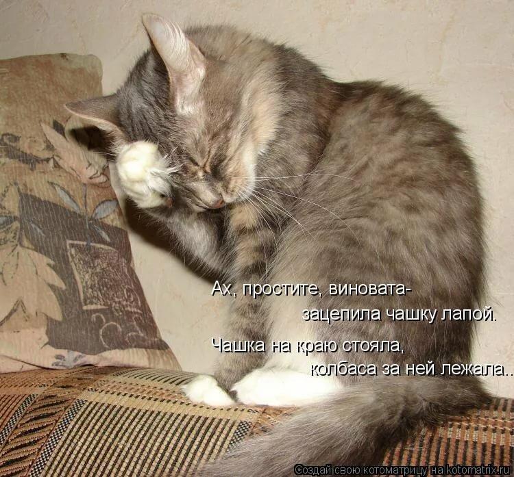 Смешные надписи в картинках с животными