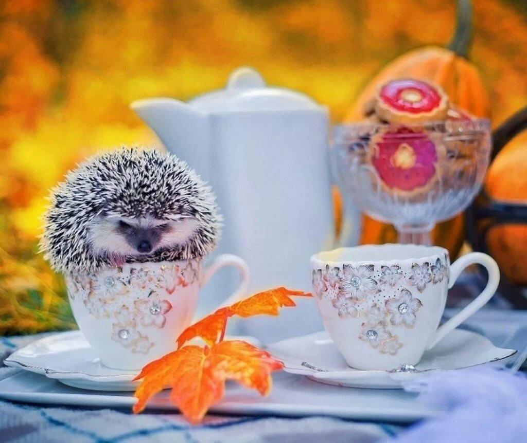 Осеннее утро картинки веселые