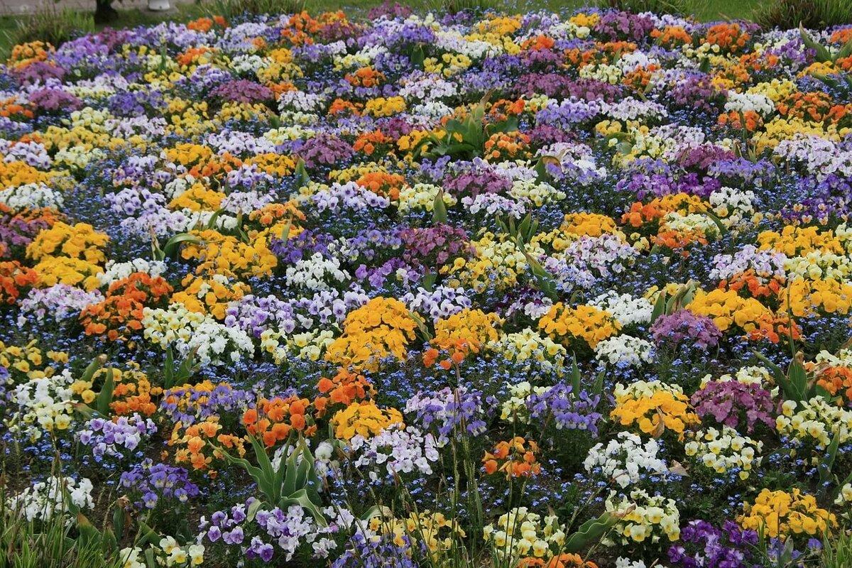 Цветы для клумбы названия и картинки