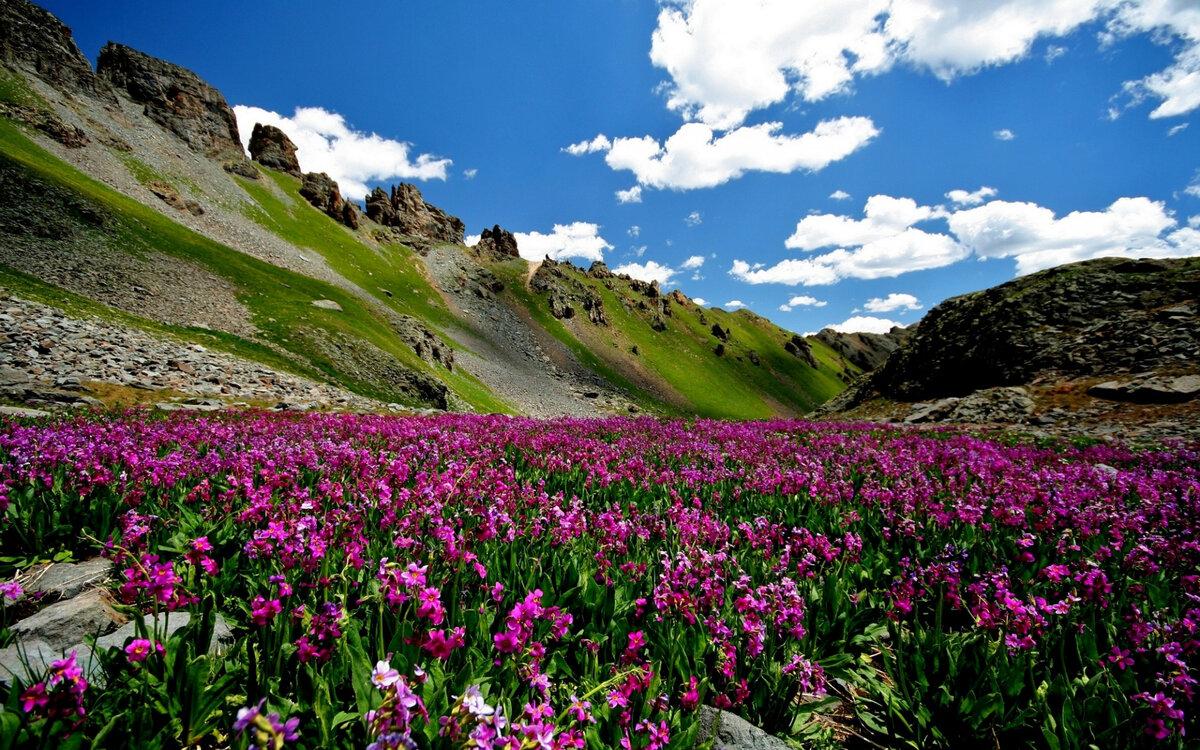 могут фото альпийского луга снг правами внж