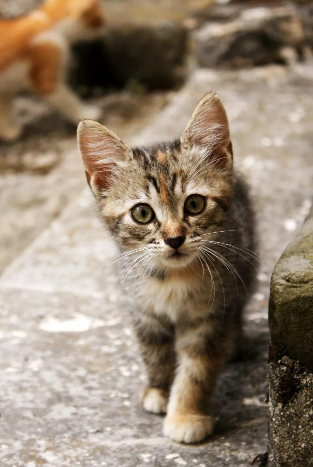живые картинки про котенка посёлок страшной