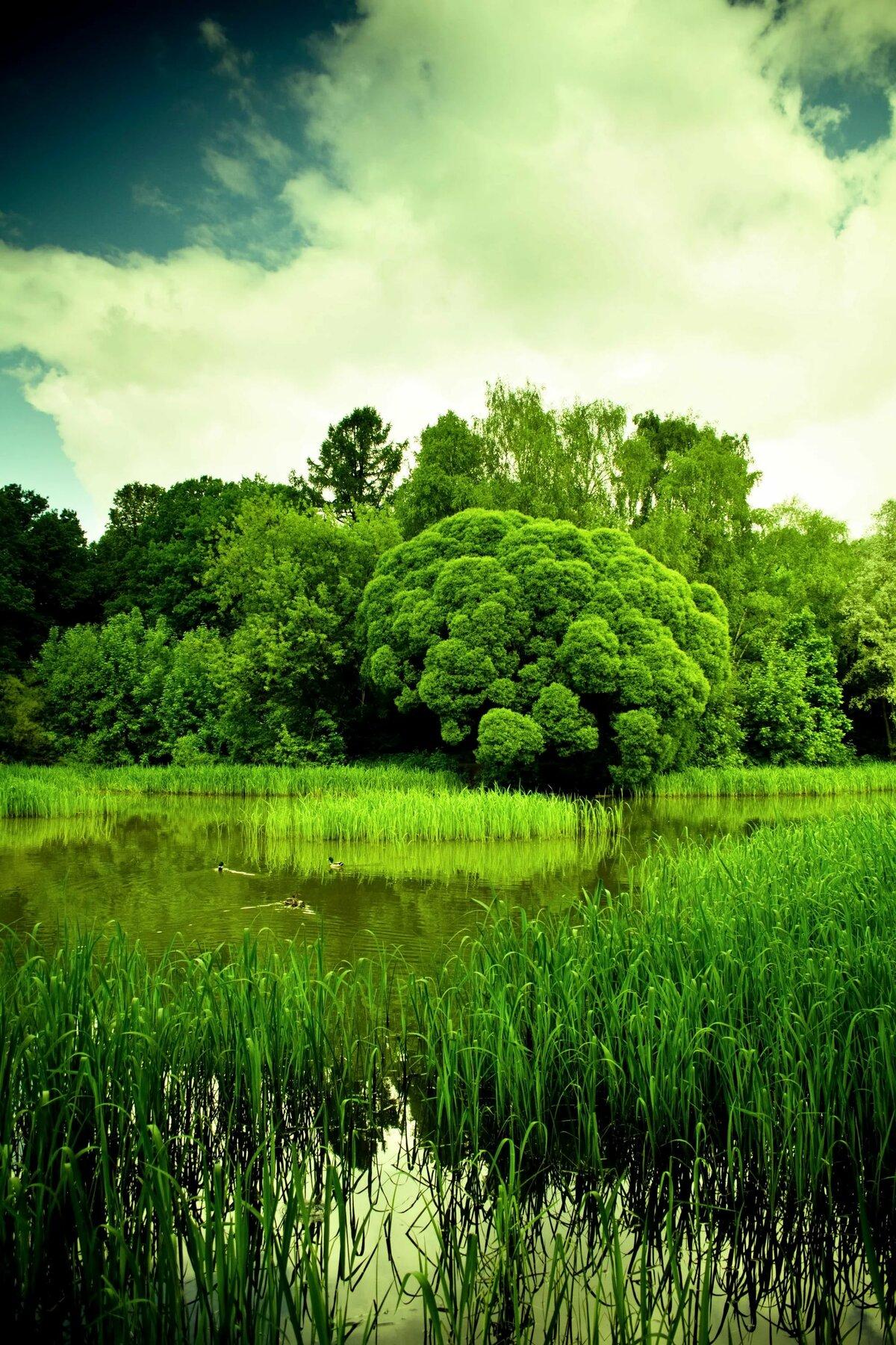 телефонный код, картинки на смартфон природа лето утеплить