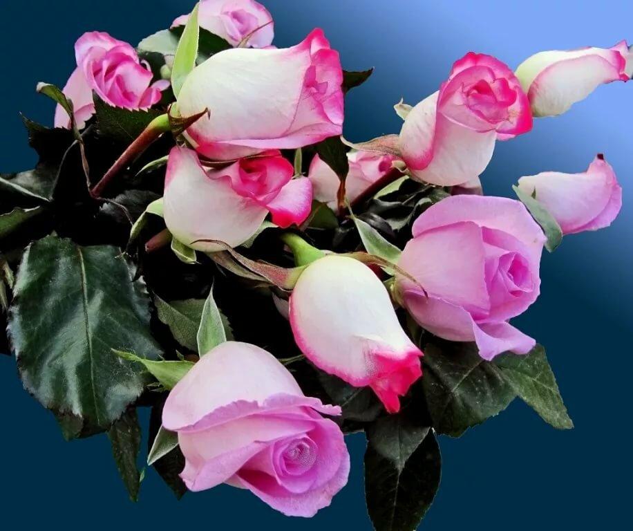 плейкаст красивые розы для тебя даже если вас