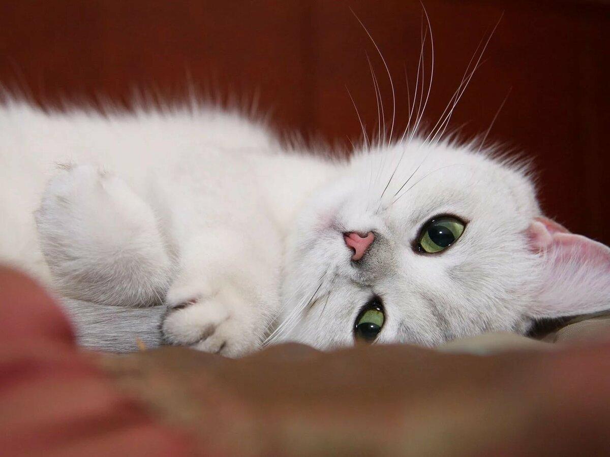 скучаю котик картинки