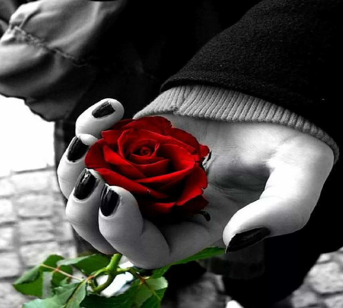 Картинки роз на аву