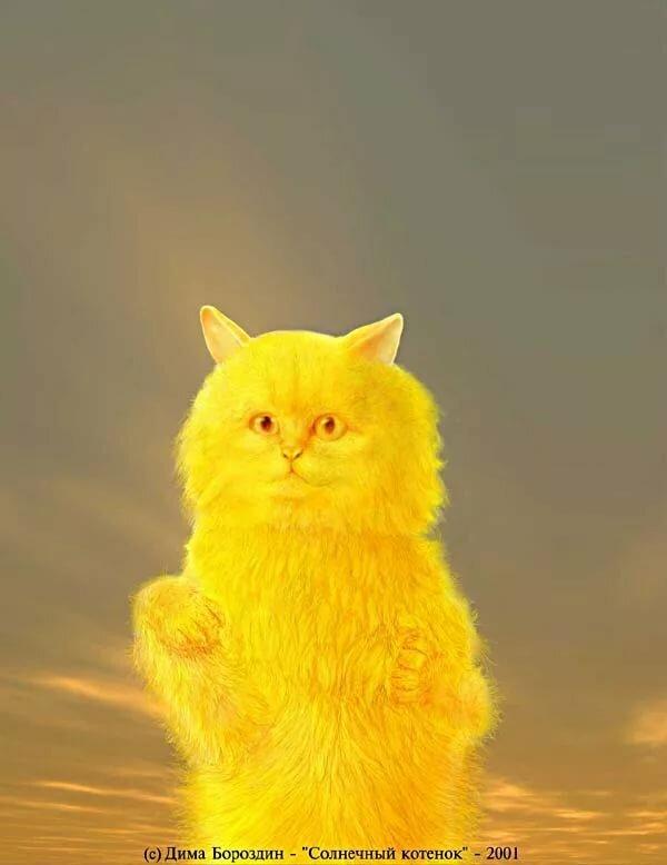 Котенок с солнышком картинки