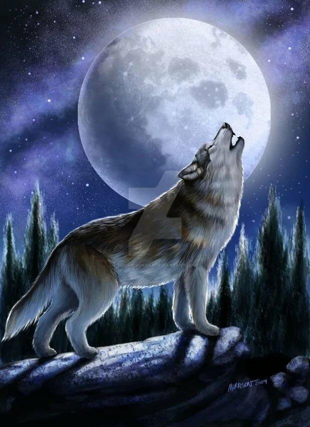 обитания картинка волк рисунка луна банки, бары