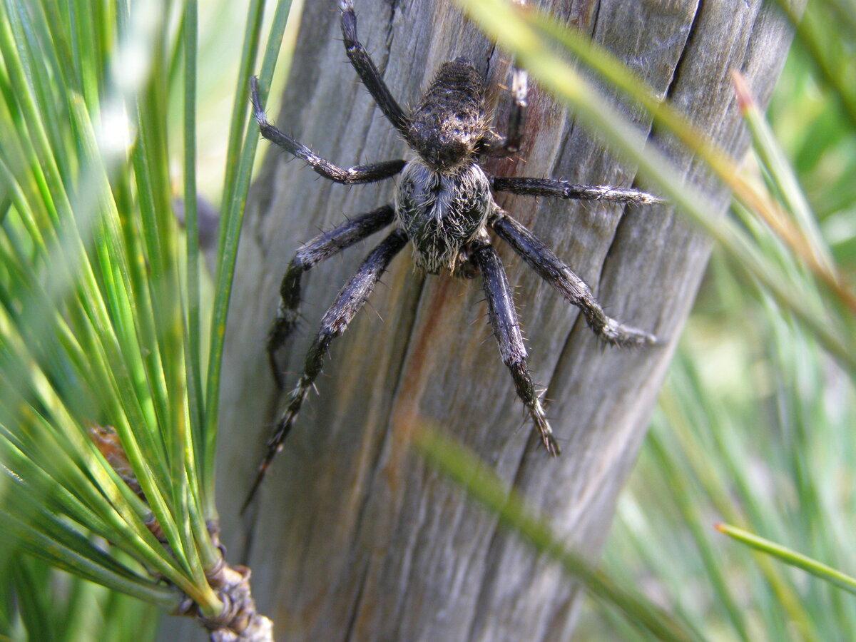 Ядовитые пауки подмосковья фото и названия свете есть