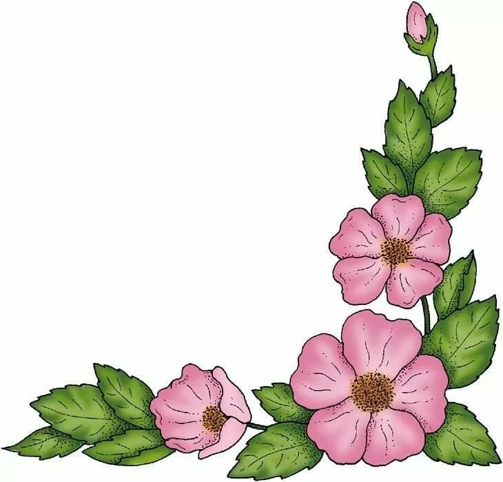 Картинки цветы нарисованные рамки