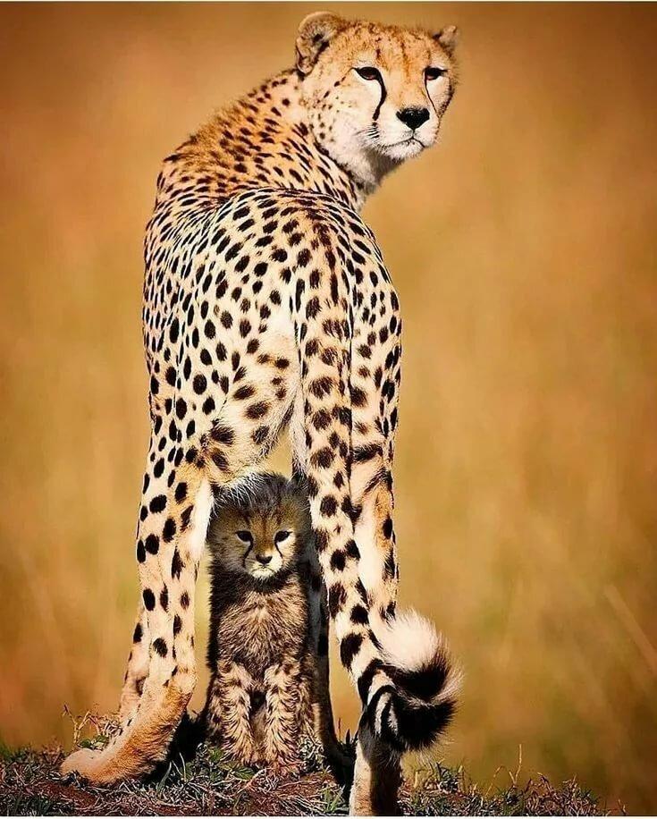 "🌎 ig_fotoclub 🌍 on Instagram: ""📸 Photo by@piper_mackay Cara mamma Animali, Leopardi e Cuccioli"