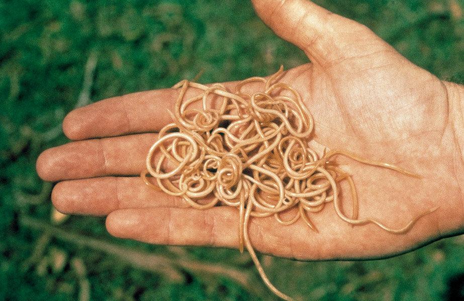 Гельминот от паразитов в Стерлитамаке