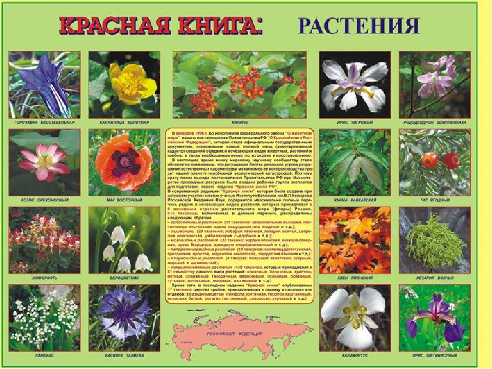 Красная книга растений с картинками для детей
