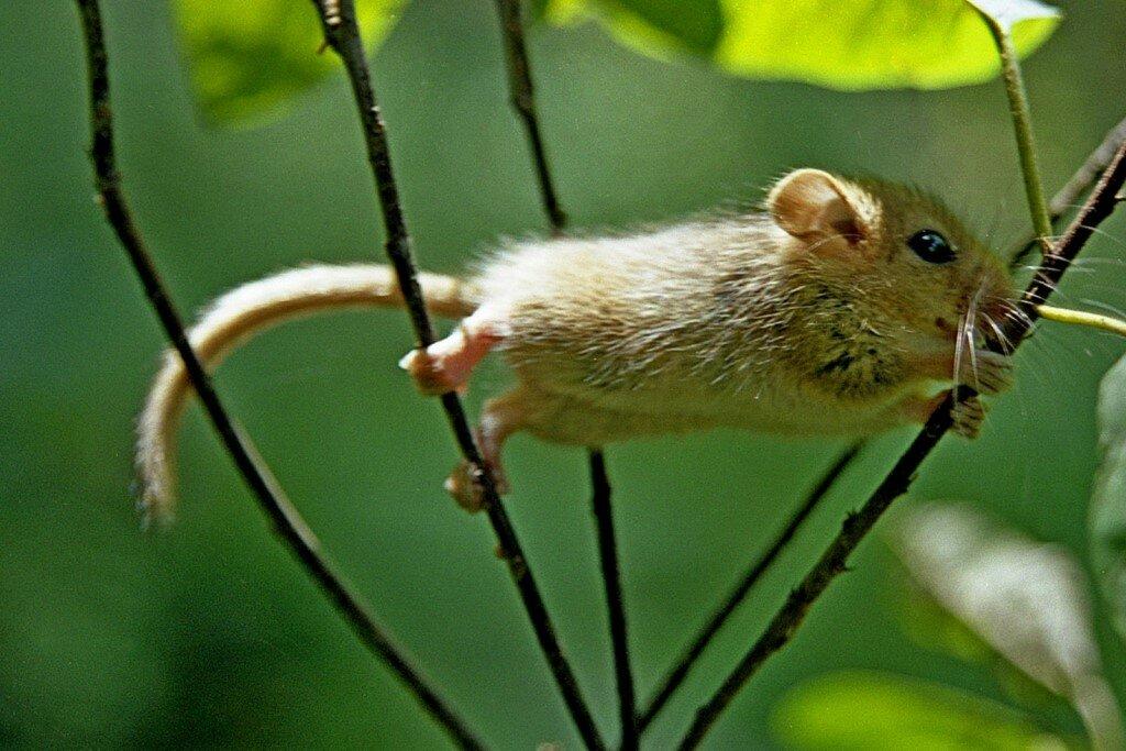 картинки заяц мышь белка выходит периодичностью один