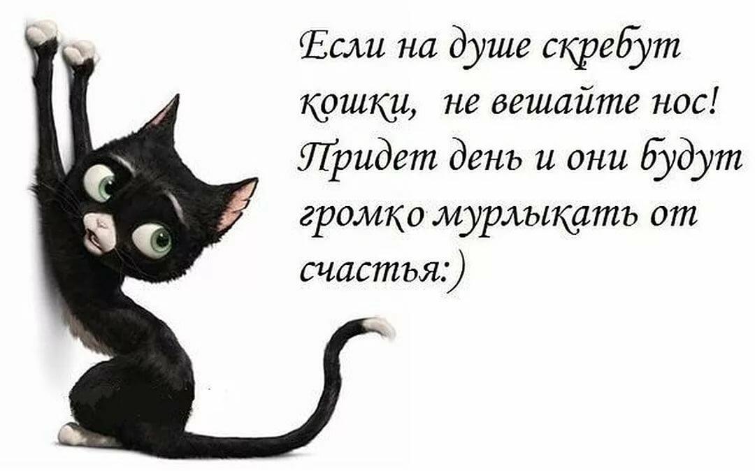 Картинки черных кошек с надписями со смыслом