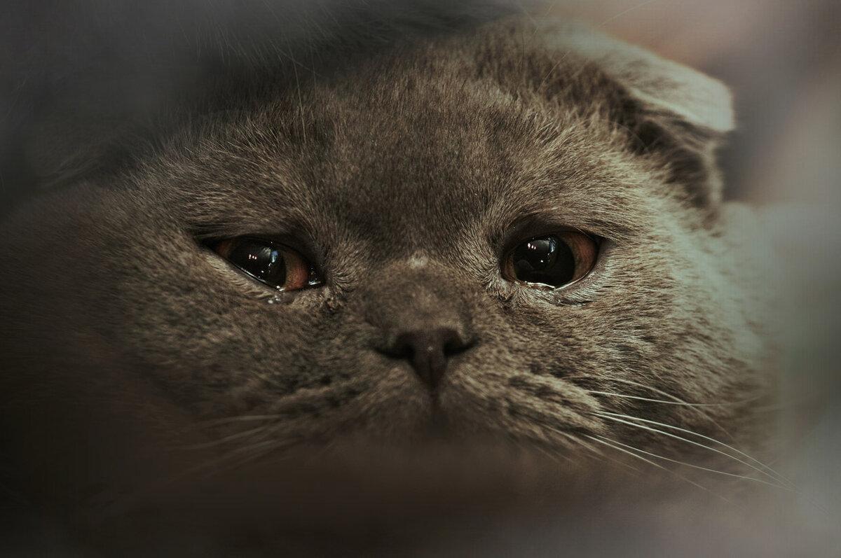картинки кота и слез гранита заказать нижнем