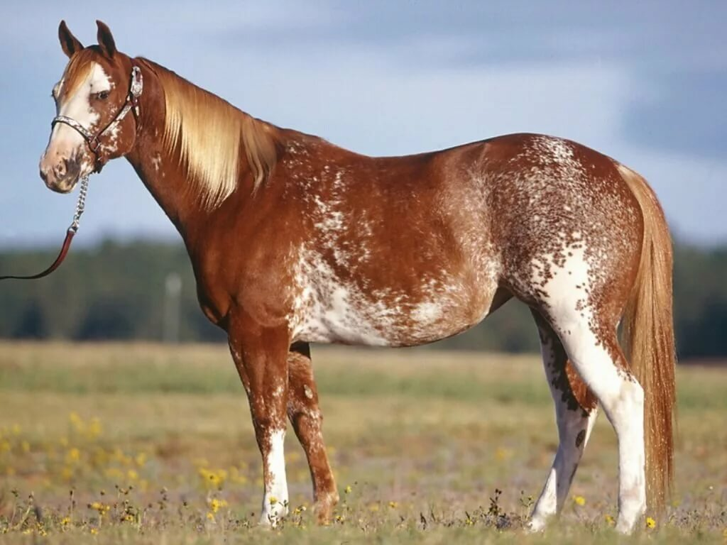 картинки с мастями лошадей