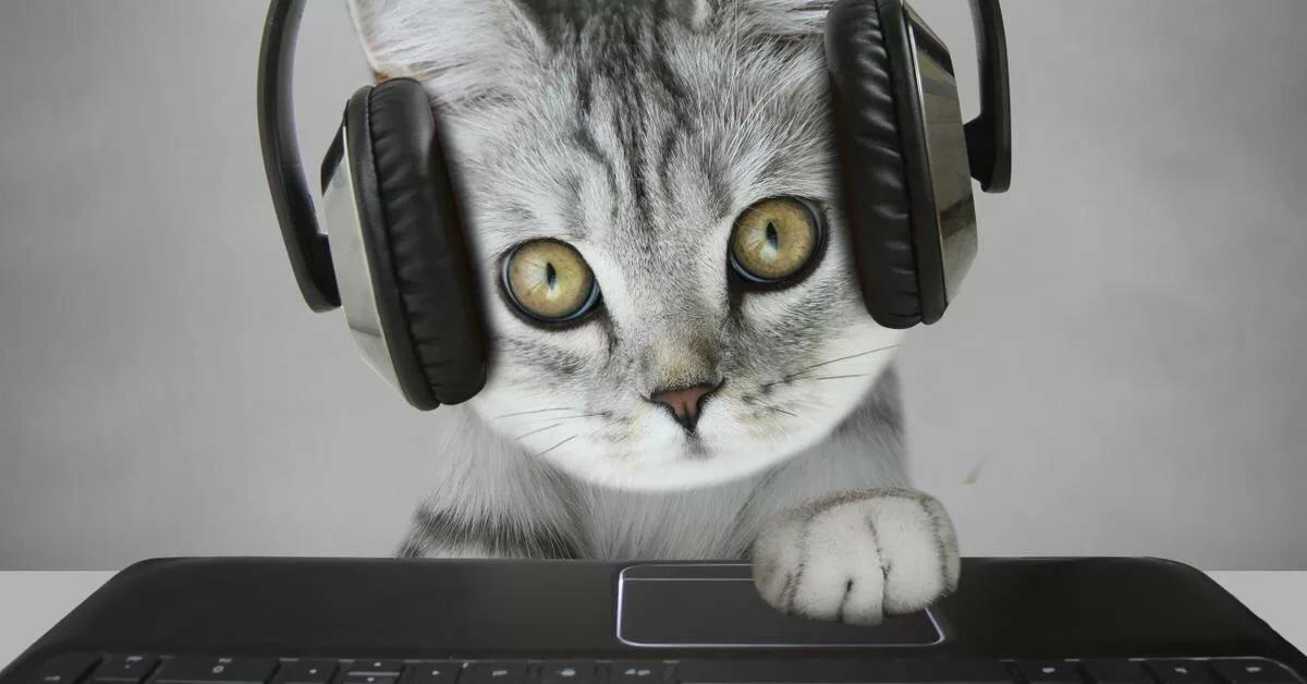 Картинки с милыми котиками в наушниках