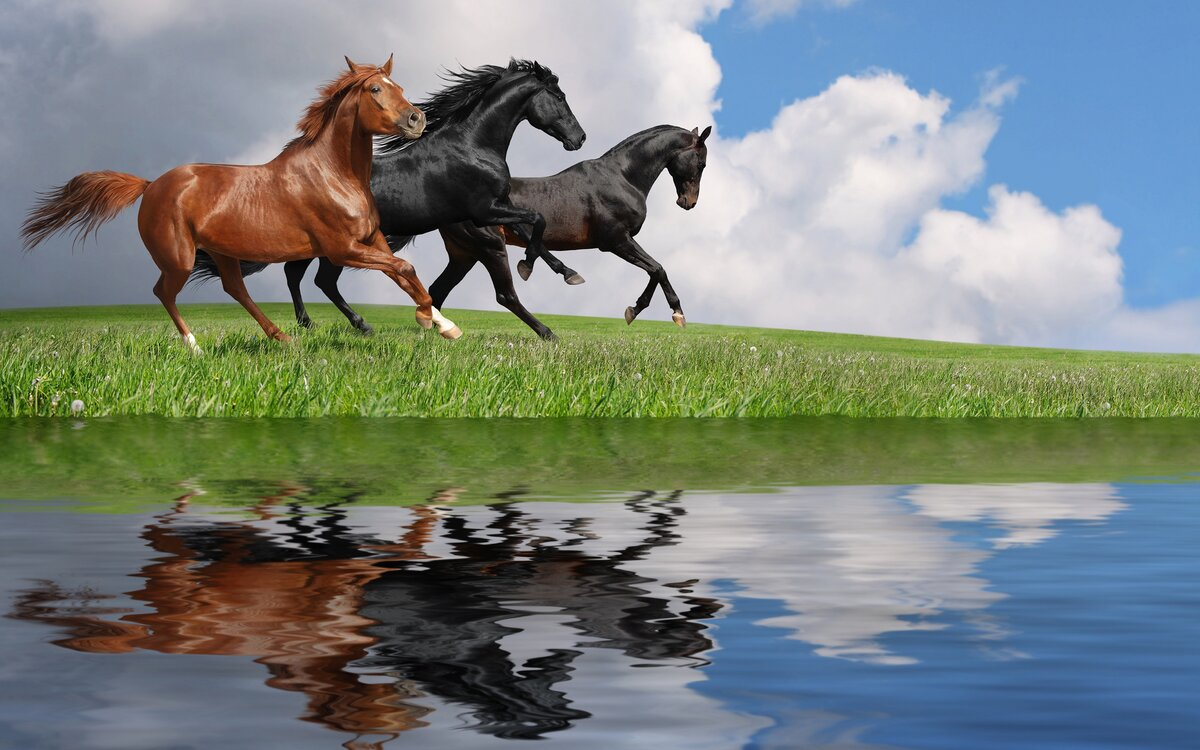 ваше картинки с лошадьми на телефон и рабочий стол крайней мере, пару