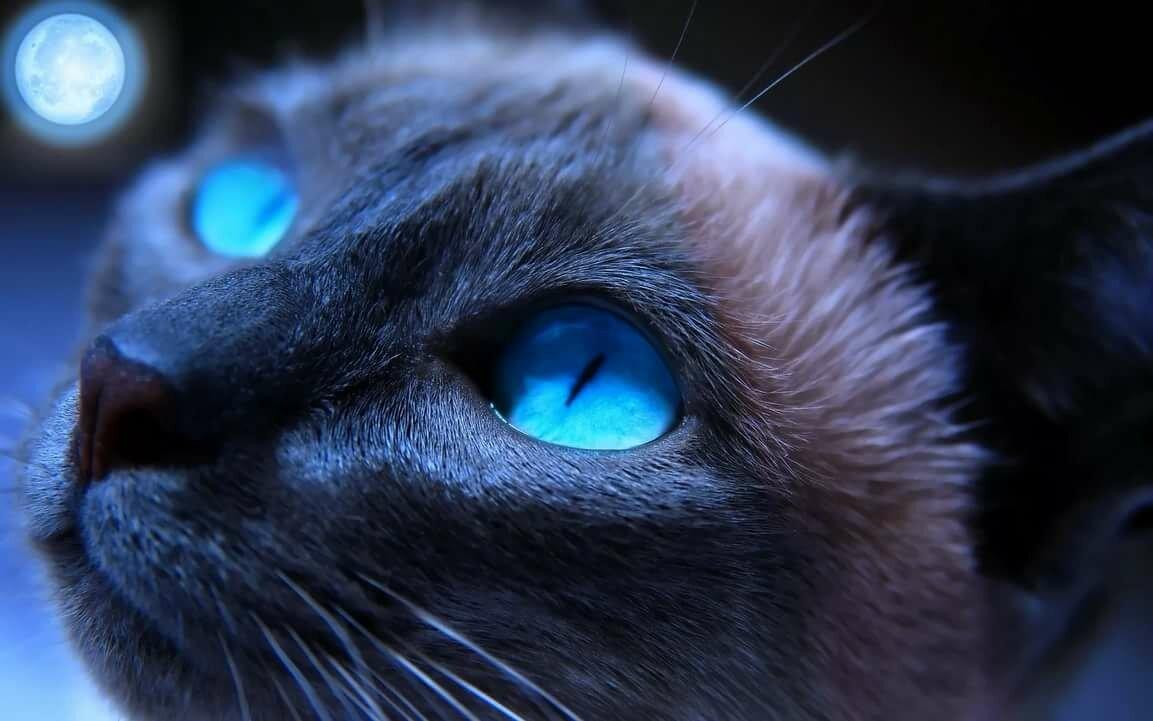картинки красивых глаз животных